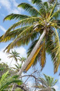 Label Voyageuse - Martinique